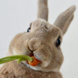 bunnyislove rabbit