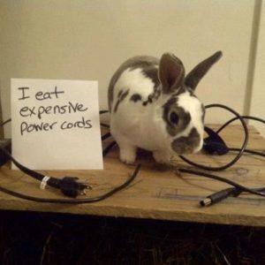 Pet Rabbit Chewing Wires