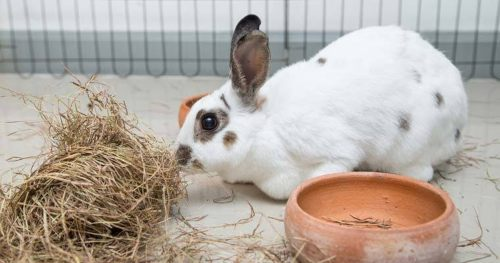 Top 10 Things To Keep In Mind Before Getting A Pet Rabbit