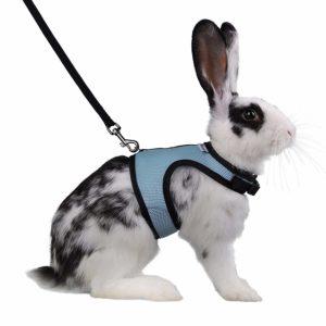 Pet Rabbit Leash