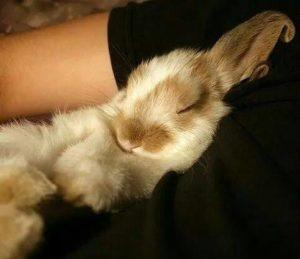 Pet Rabbit behaviour sleeping