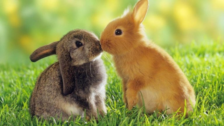 Biggest Pros & Cons Of Having A Pet Rabbit