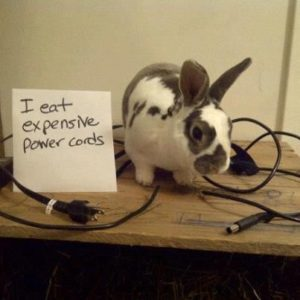 rabbit chewing cable