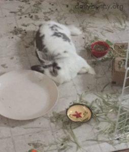 messy pet rabbit