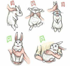 picking up rabbit