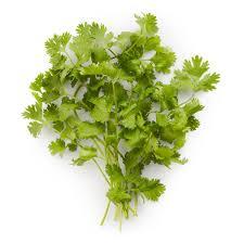 cilantro rabbit food