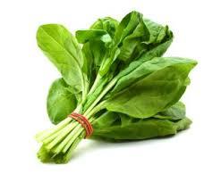 spinach rabbit food