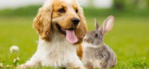 rabbit with dog