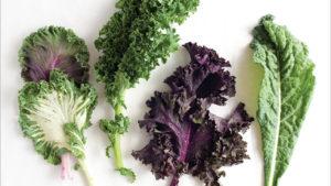 kale rabbit food