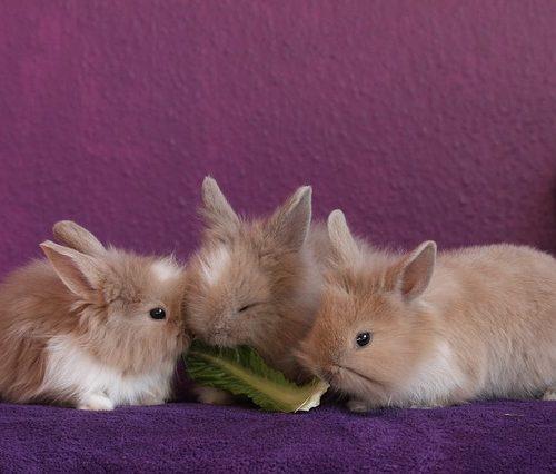 Pet Rabbits Eating Food
