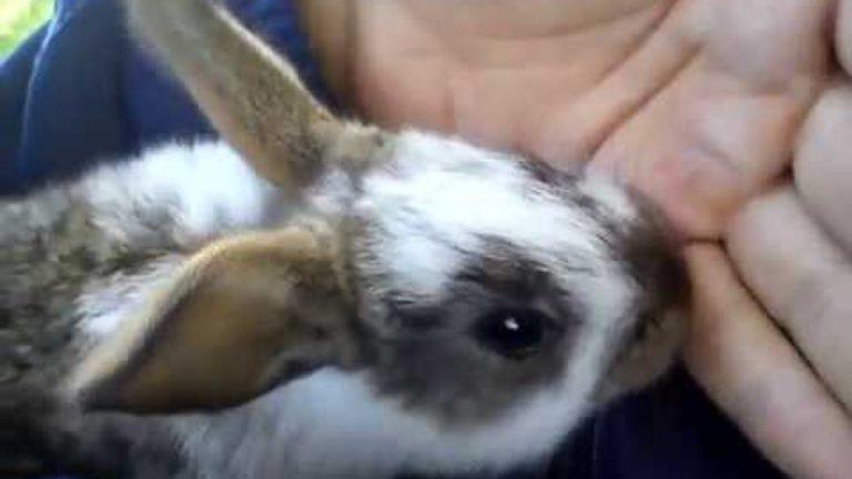pet rabbit biting hand