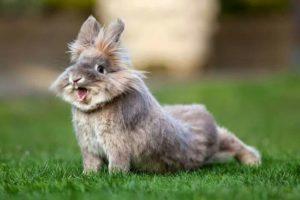 rabbit stretching
