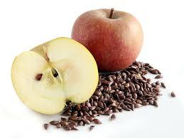 can rabbit eat apple seeds