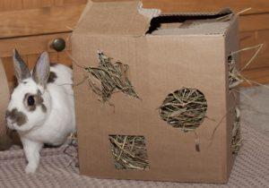 rabbit hay box toy