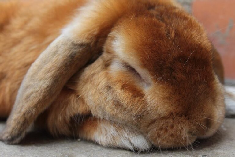 How To Know If A Rabbit Is Sleeping?