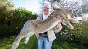 darius world record holder rabbit