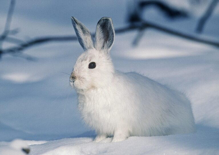 What Should You Feed Wild Rabbits In Winter?