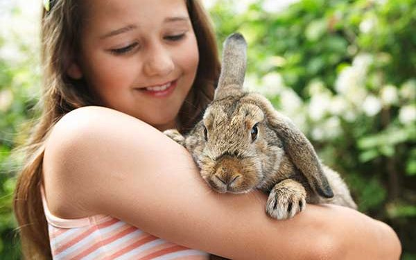 The Ultimate New Rabbit Checklist For Bunny Beginners