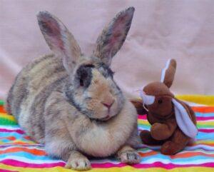 rabbit dewlap