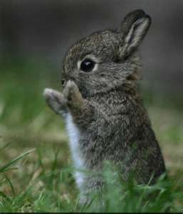 what to feed baby wild rabbits