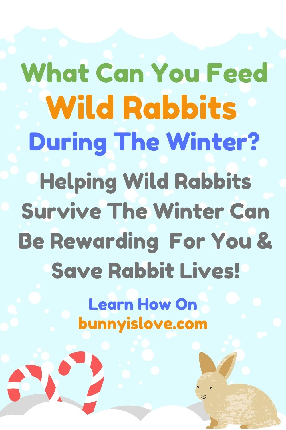 what to wild rabbits during winter