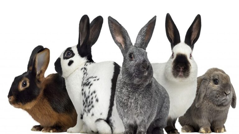 Top 10 Best Breed Of Rabbit For First Time Owners