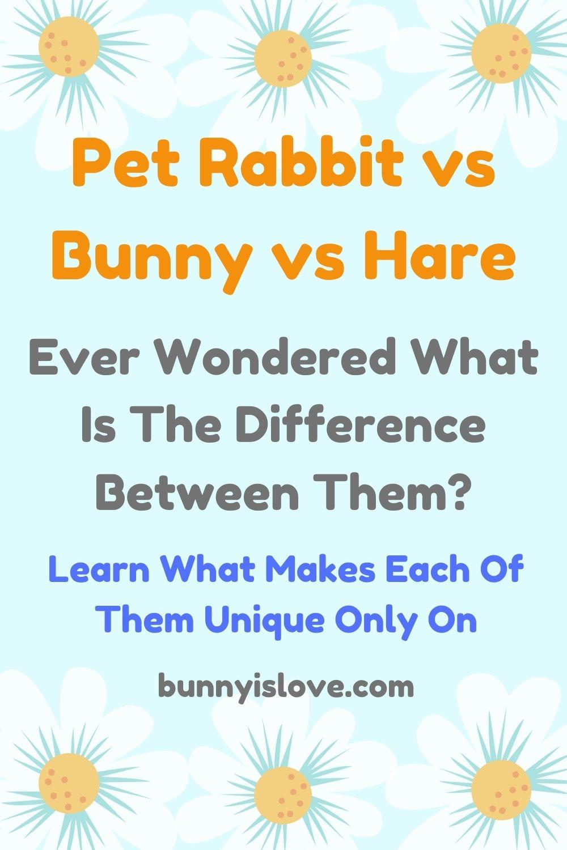 rabbit vs bunny vs hare