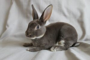 rabbits have long ears
