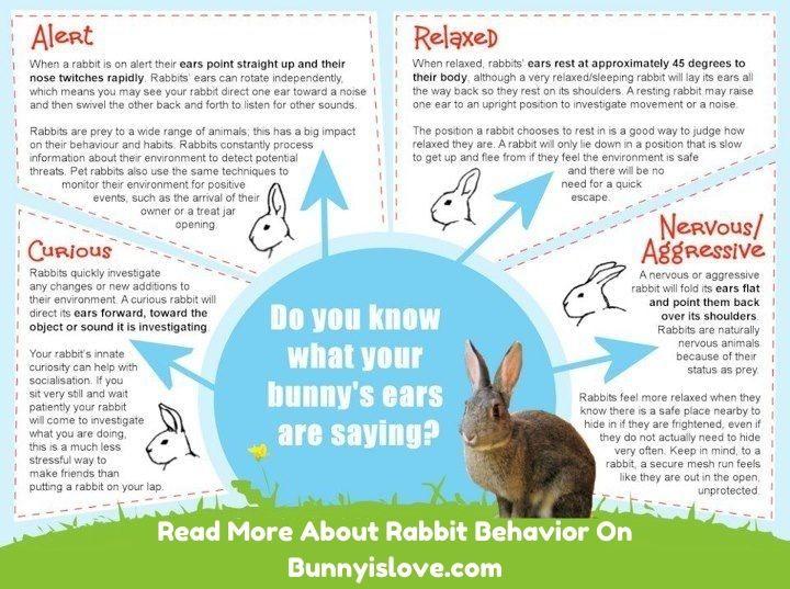 rabbit ear position