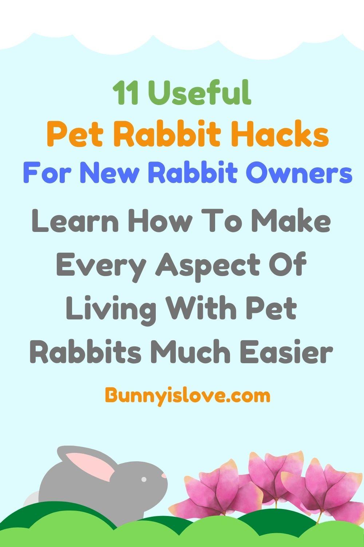pet rabbit hacks