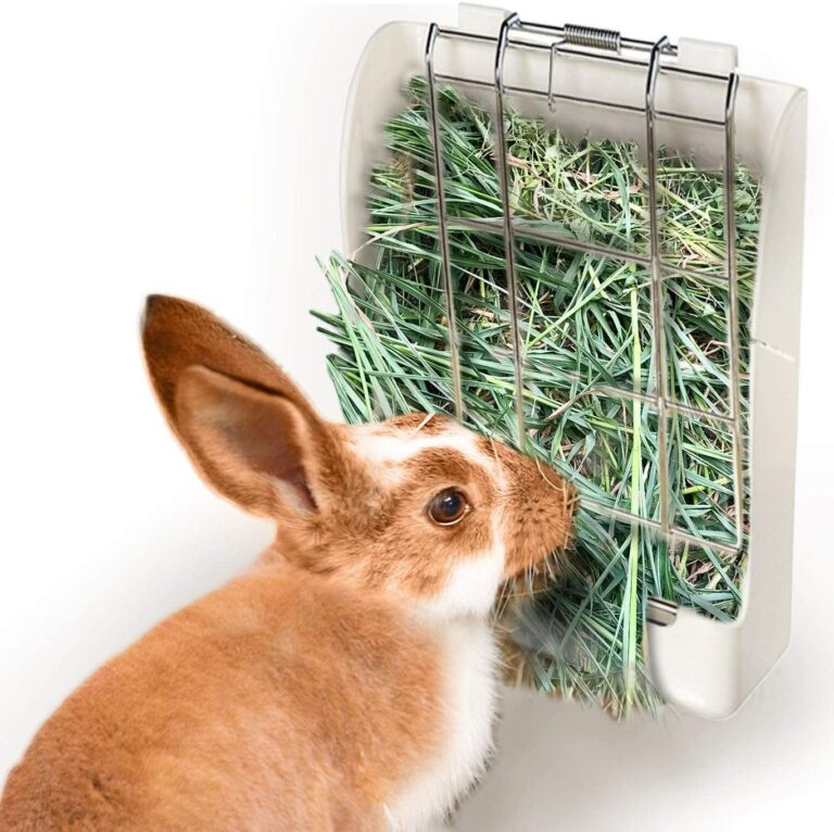 Top 5 Best Hay Feeders For Rabbits - In Depth Reviews