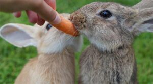 motivate rabbits with food
