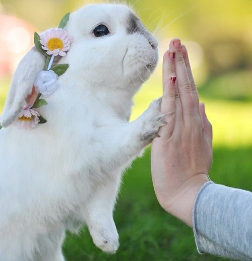 Teach A Rabbit To High Five In 6 Easy Steps