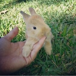 rabbit paw on hand