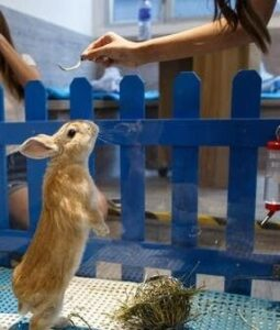 rabbit standing for food