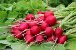 radish for rabbits