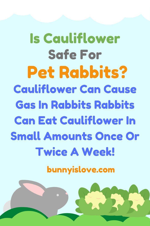 Can Rabbits Eat Cauliflower Pin