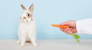 lure rabbit with carrot