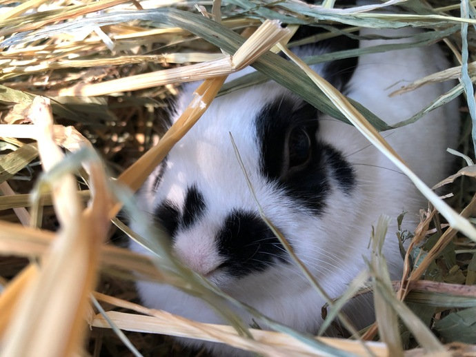 How To Search For A Missing Rabbit?