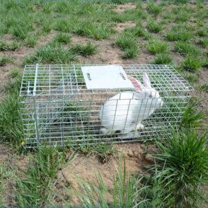 rabbit rescue trap