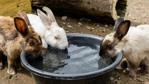 8 Easy Ways Get Your Rabbit To Drink More Water