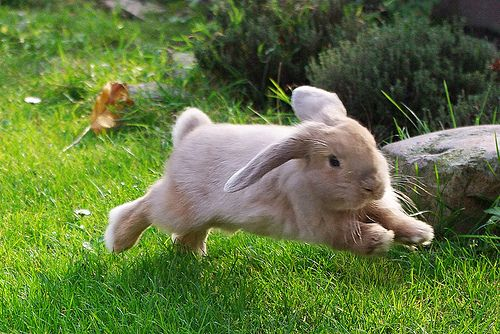 7 Easy Steps To Teach Your Rabbit To Spin Around!