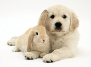 keep rabbits and dogs together