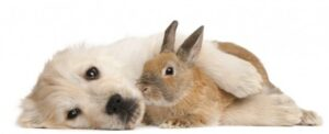 rabbit gets along with dogs