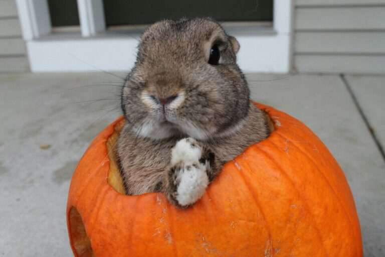 Can Rabbits Eat Pumpkin - Skin, Seeds & Leaves?